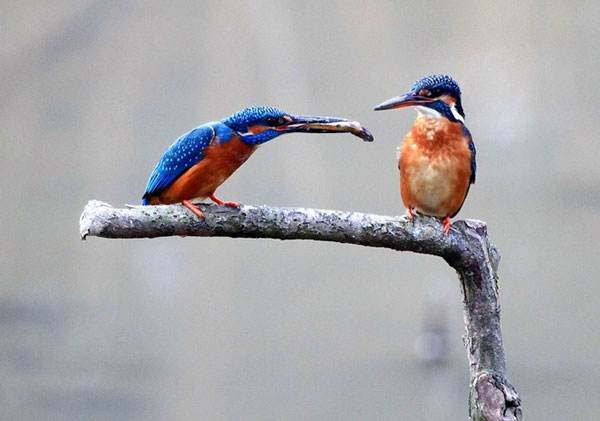 如何给宠物鸟选择饲料?